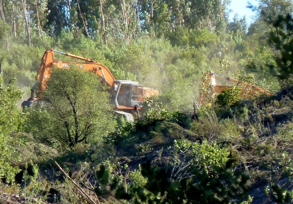 Escavadoras desmatar