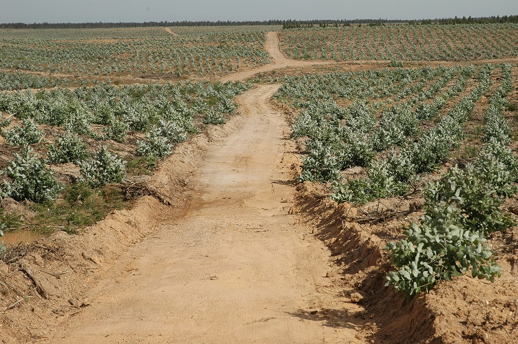 Monocultura eucalipto 10 7 2009 011 2