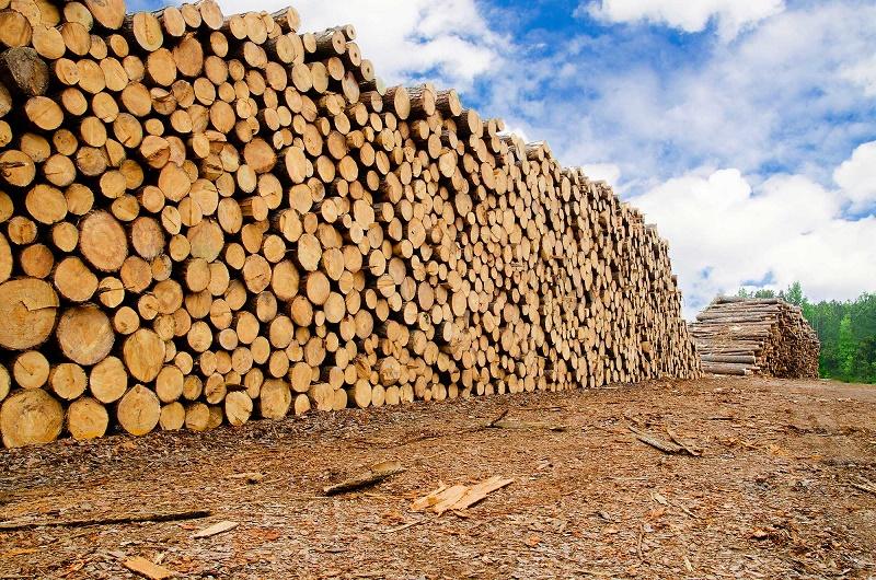 madeira centrais biomassa
