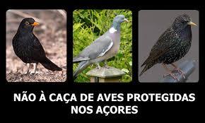 petição aves açores