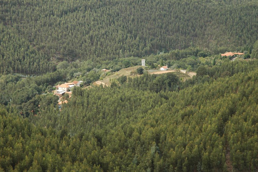 eucaliptal - Foto Quercus