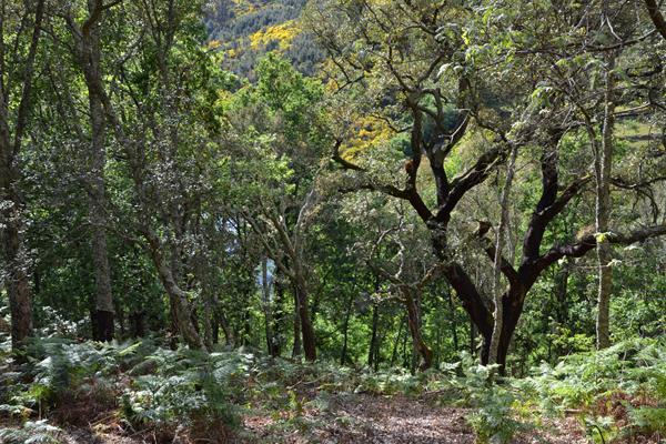 Sobreirais Tâmega - Foto Quercus