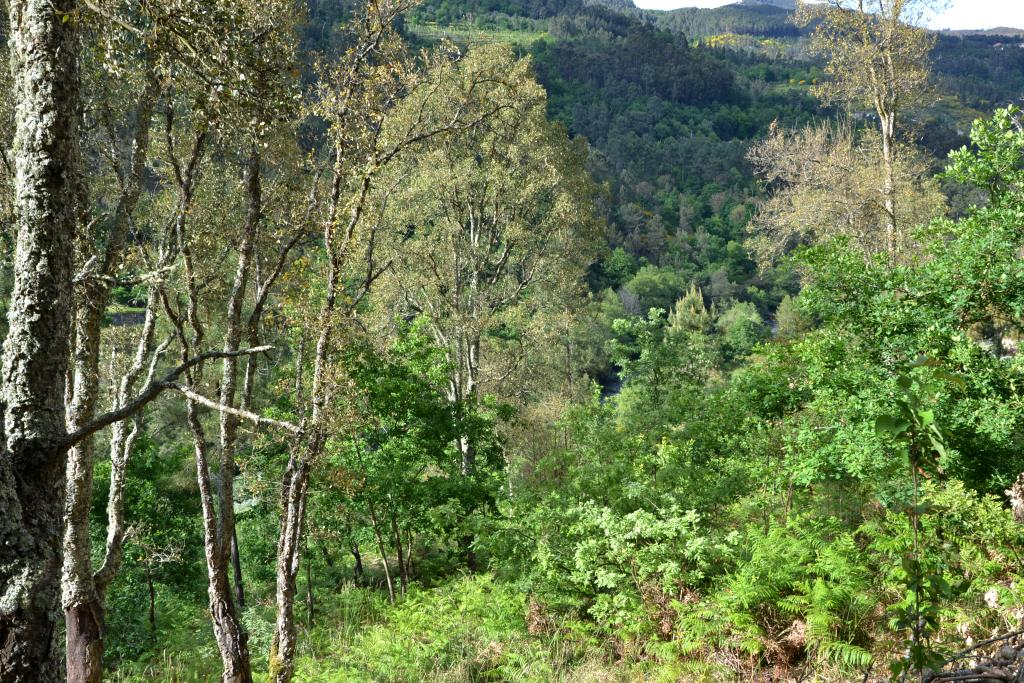 Vale Tâmega - Foto Quercus
