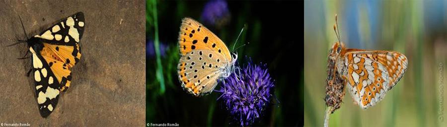 borboletas guarda