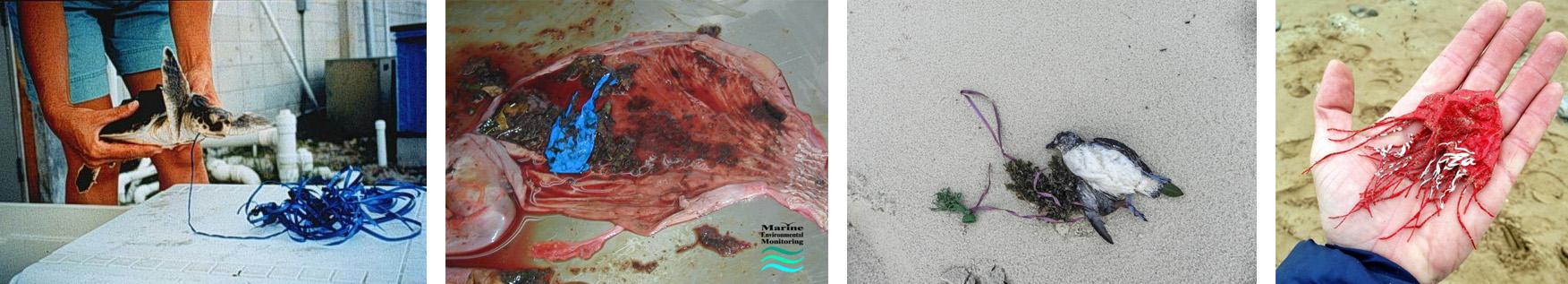 animais mortos baloes