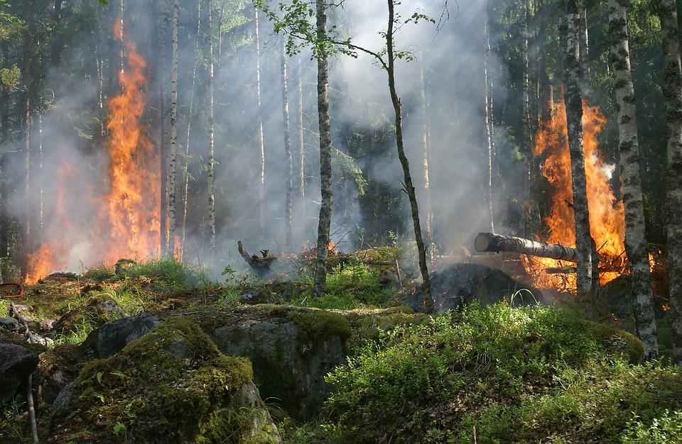 incendio florestal out 2017