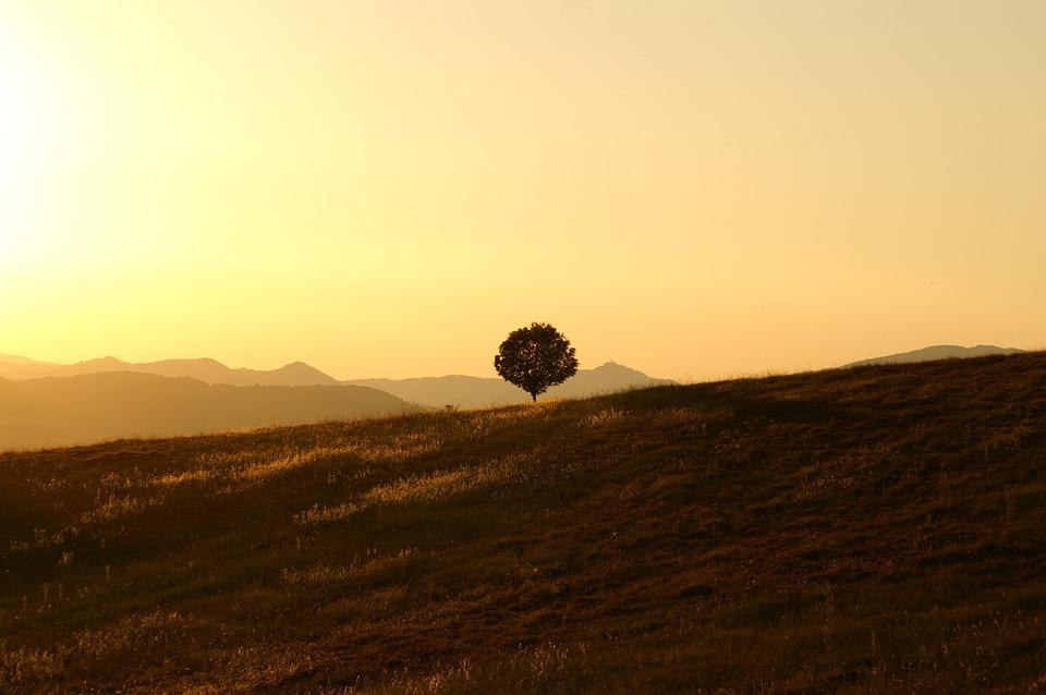 tree 189852 960 720